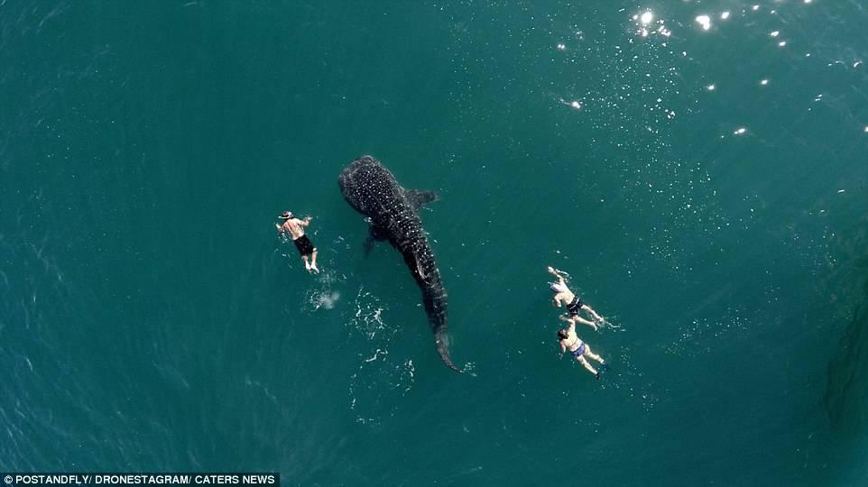 游客们正与鲸鲨共泳