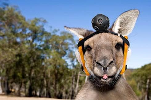Kangaroo-Street-View.jpg-700x0