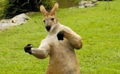 funny_animals_kangaroo_1005