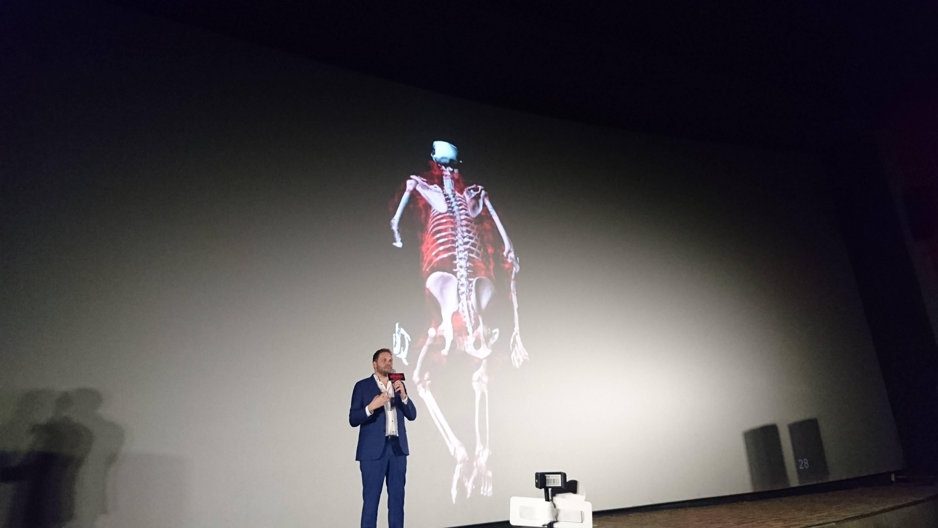 猩猩的骨骼架构模型