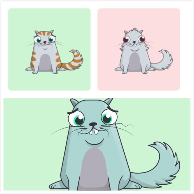 cat-breed