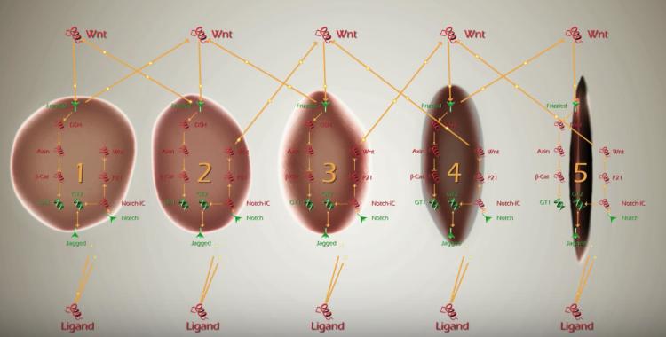 用BMA分析分子相互作用 图?#20309;?#36719;