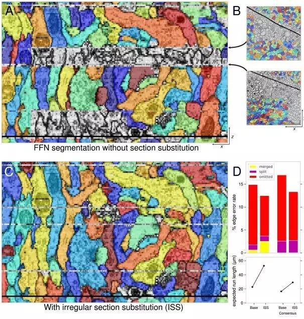 研究人员使用SECGAN来计算图像体积(volume)中缺失的切片,而当使用SECGAN时,研究人员发现FFN能够更可靠地跟踪多个缺失切片的位置。