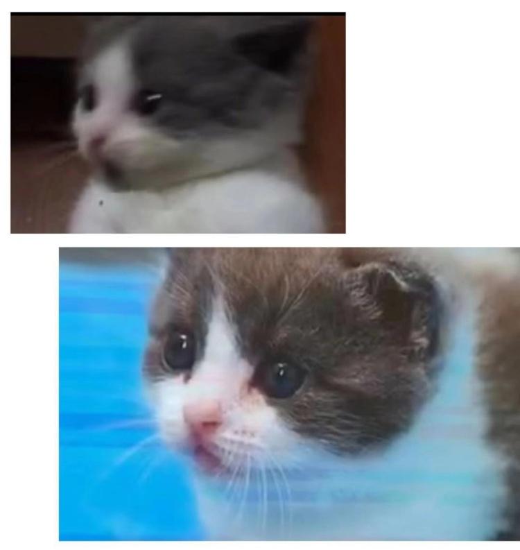 国内首例商业克隆猫诞生记