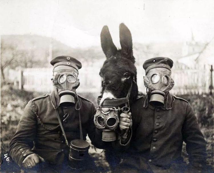 △两名德国士兵和他们的驴,都有防毒面具
