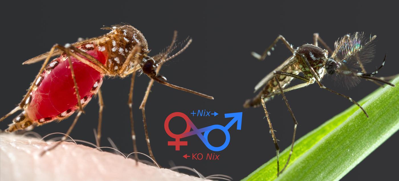 mosquito-nix-change