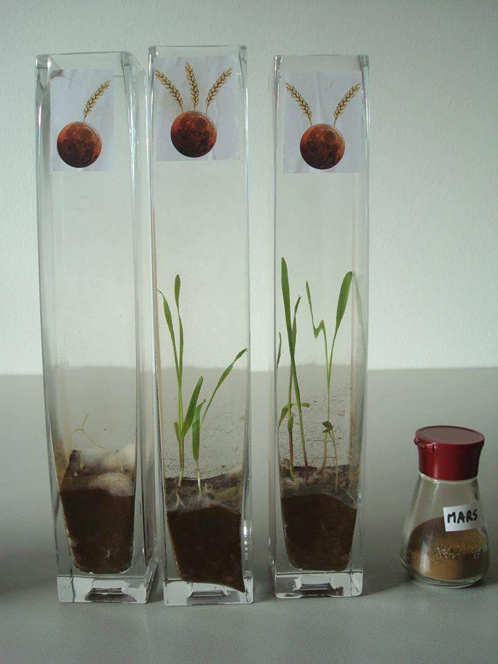 实验成功!火星上真的可以种土豆,但可能有毒