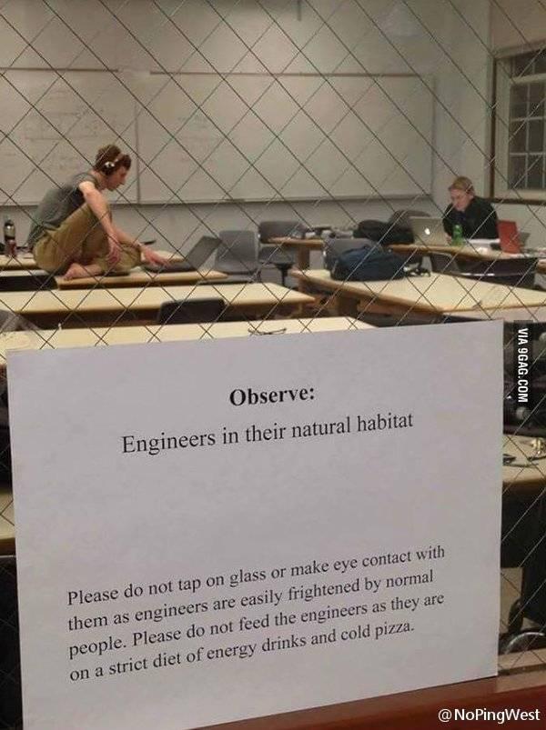 wild programmer