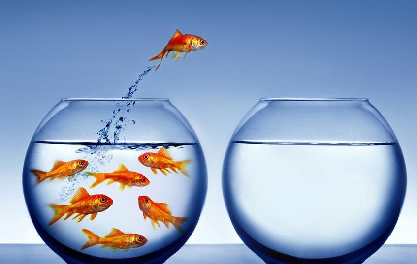 牛津大学最新研究表明:能比得过王思聪的,就只有你家水缸里的那些鱼了-PingWest 品玩