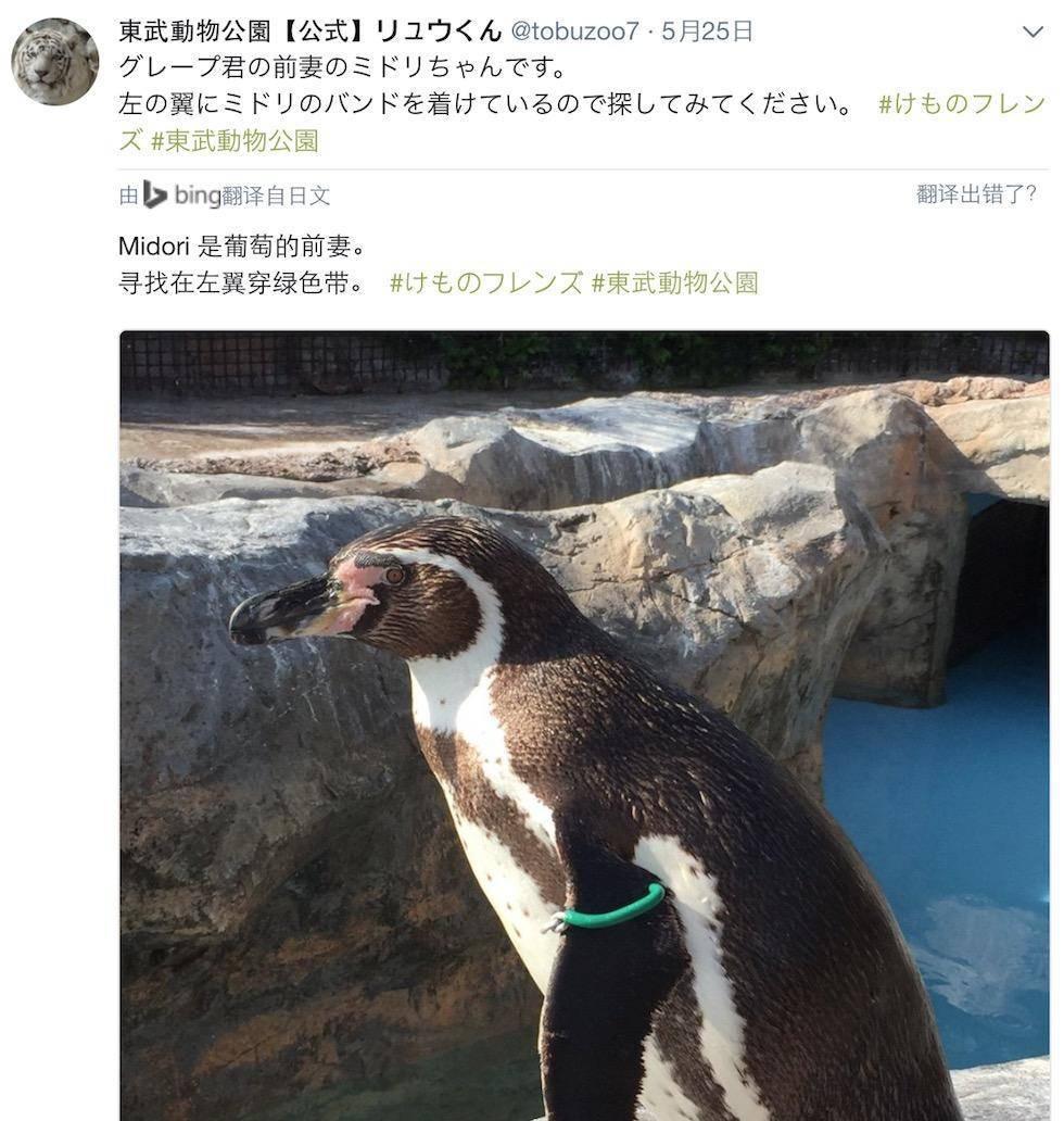 动物园还公布了小绿的照片