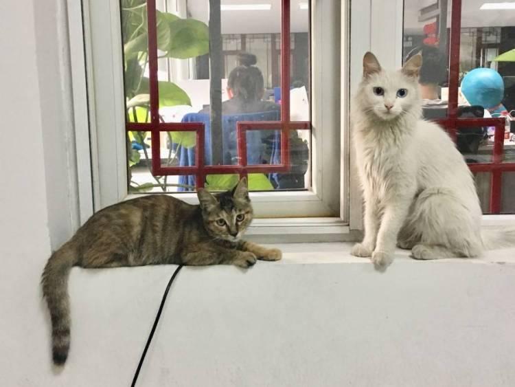 我猫和公司的猫