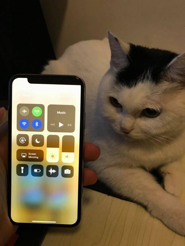 qdruid 表示:这台 iPhone X 的刘海方向跟他家猫的刚好反过来